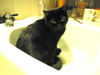 a cat in a sink